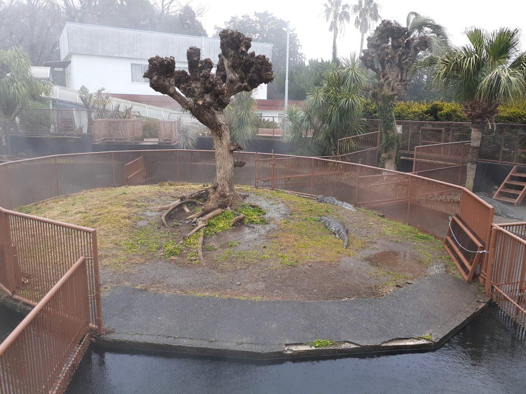 雨の日のバナナワニ園