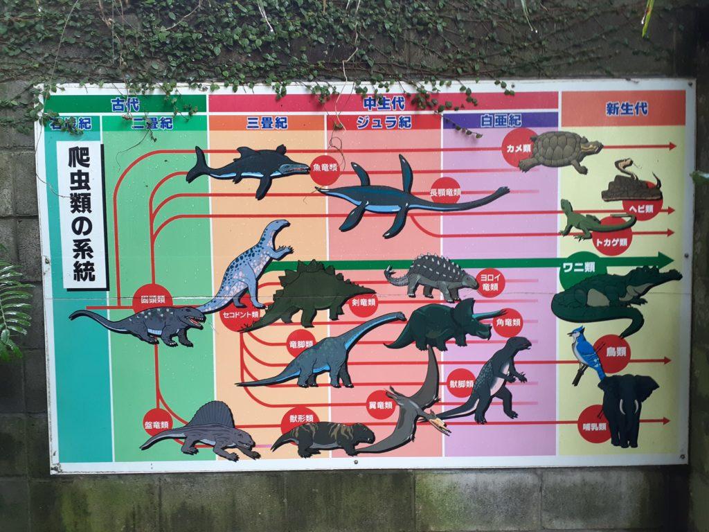 爬虫類の系統