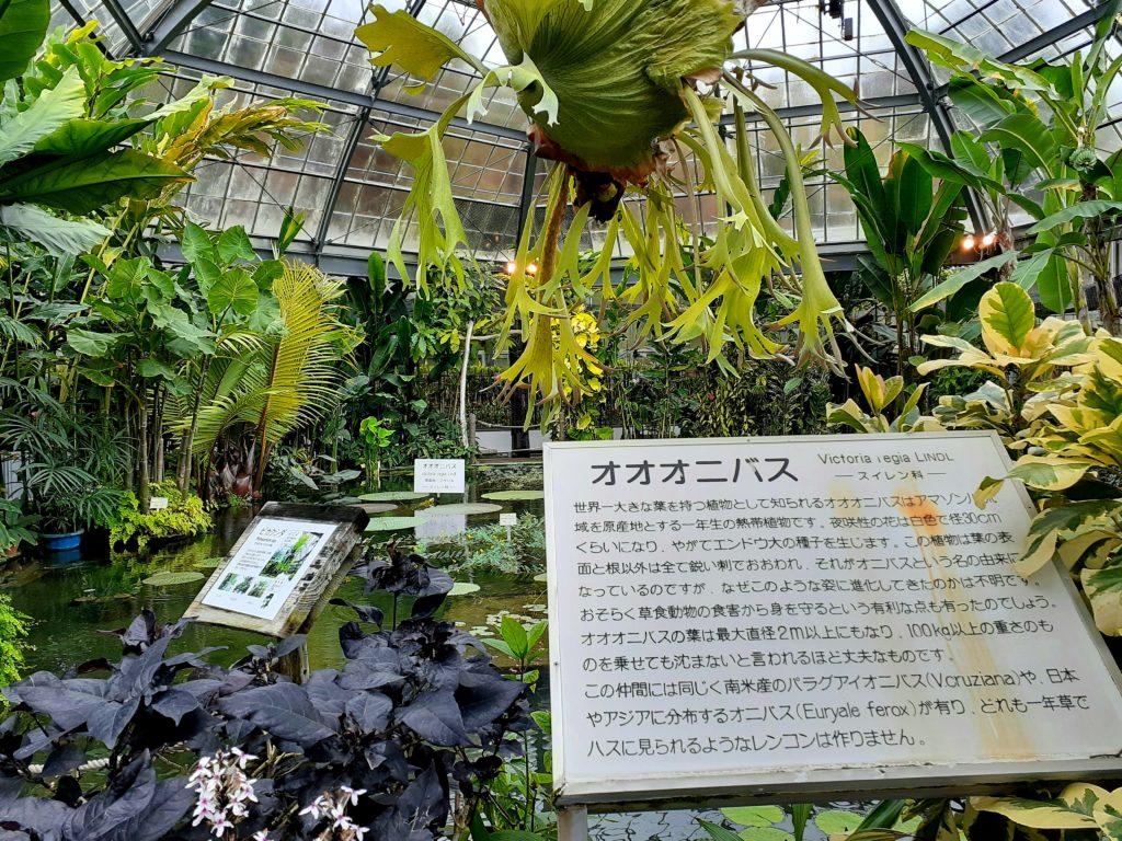 バナナワニ園の植物園