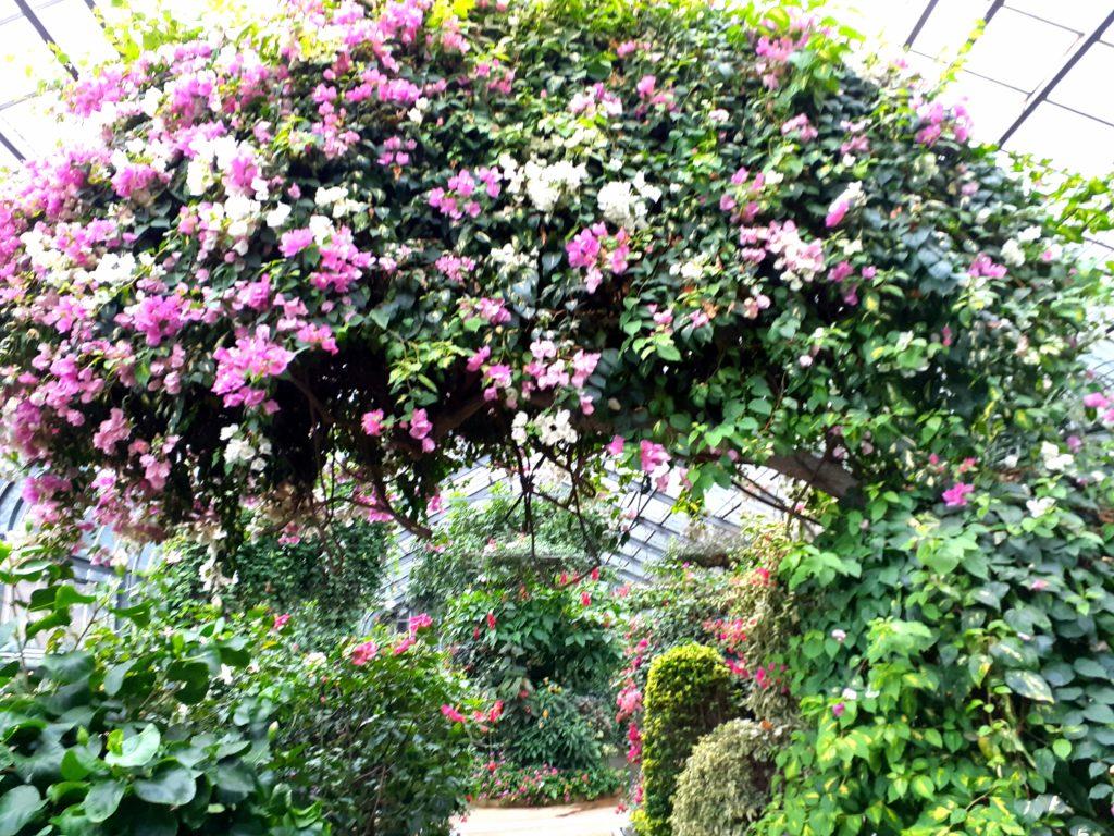 バナナワニ園の植物園お花の門