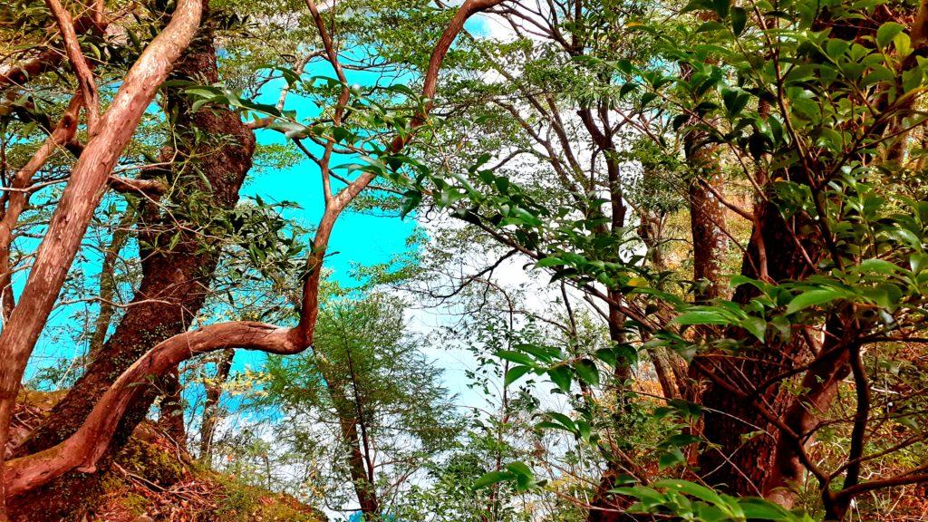 静岡の寸又峡温泉 夢の吊り橋「プロムナードコース」