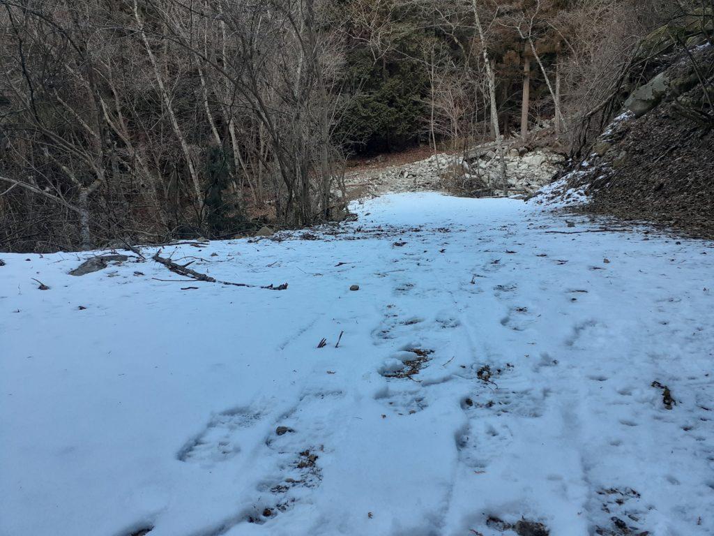 【大菩薩嶺】初心者向け日帰り登山コース 登山道
