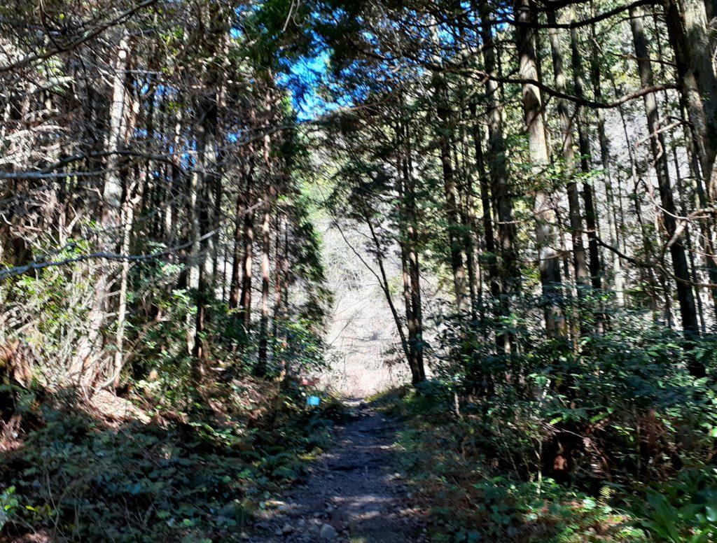 静岡市の竜爪山の登山、登山道