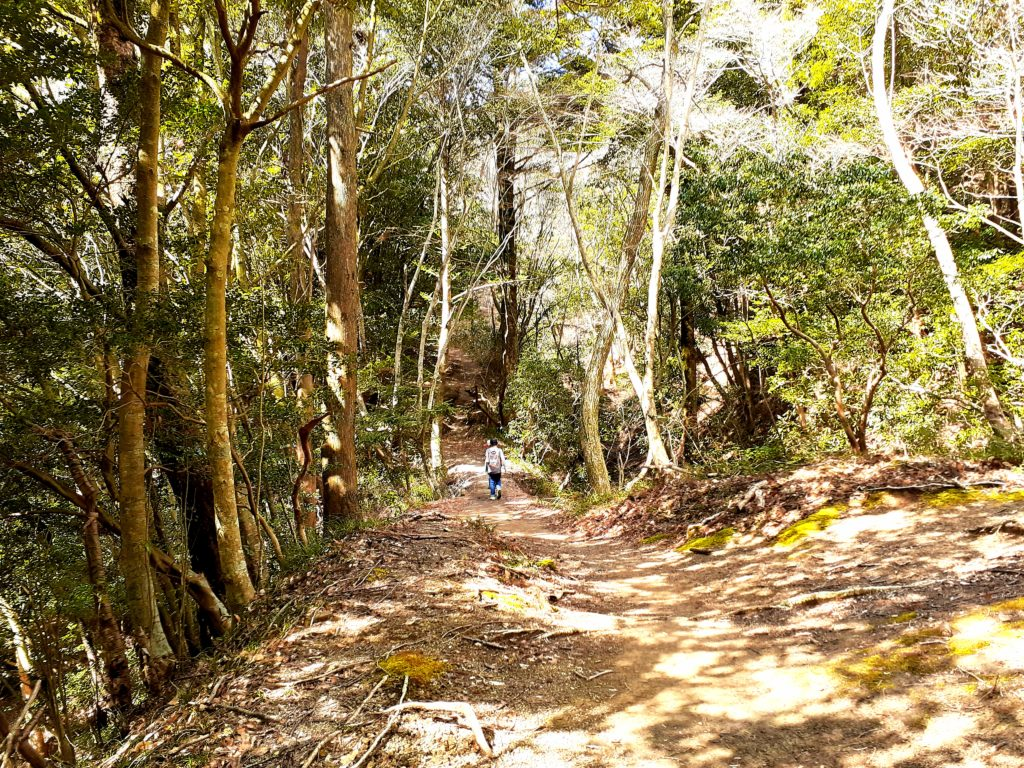 静岡市の竜爪山の登山、歩きやすい
