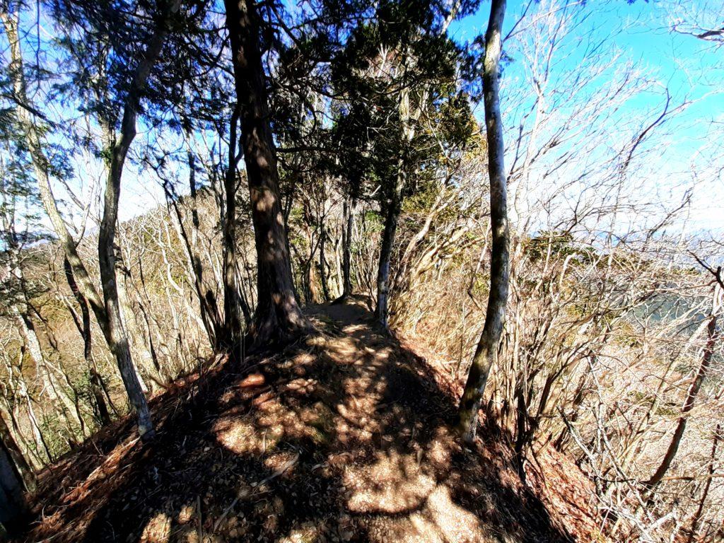 静岡市の竜爪山の登山、尾根