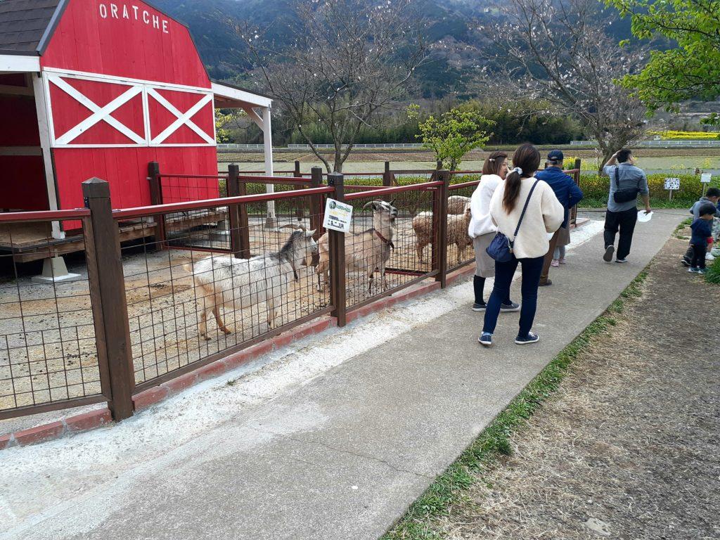酪農王国オラッチェのヤギと羊