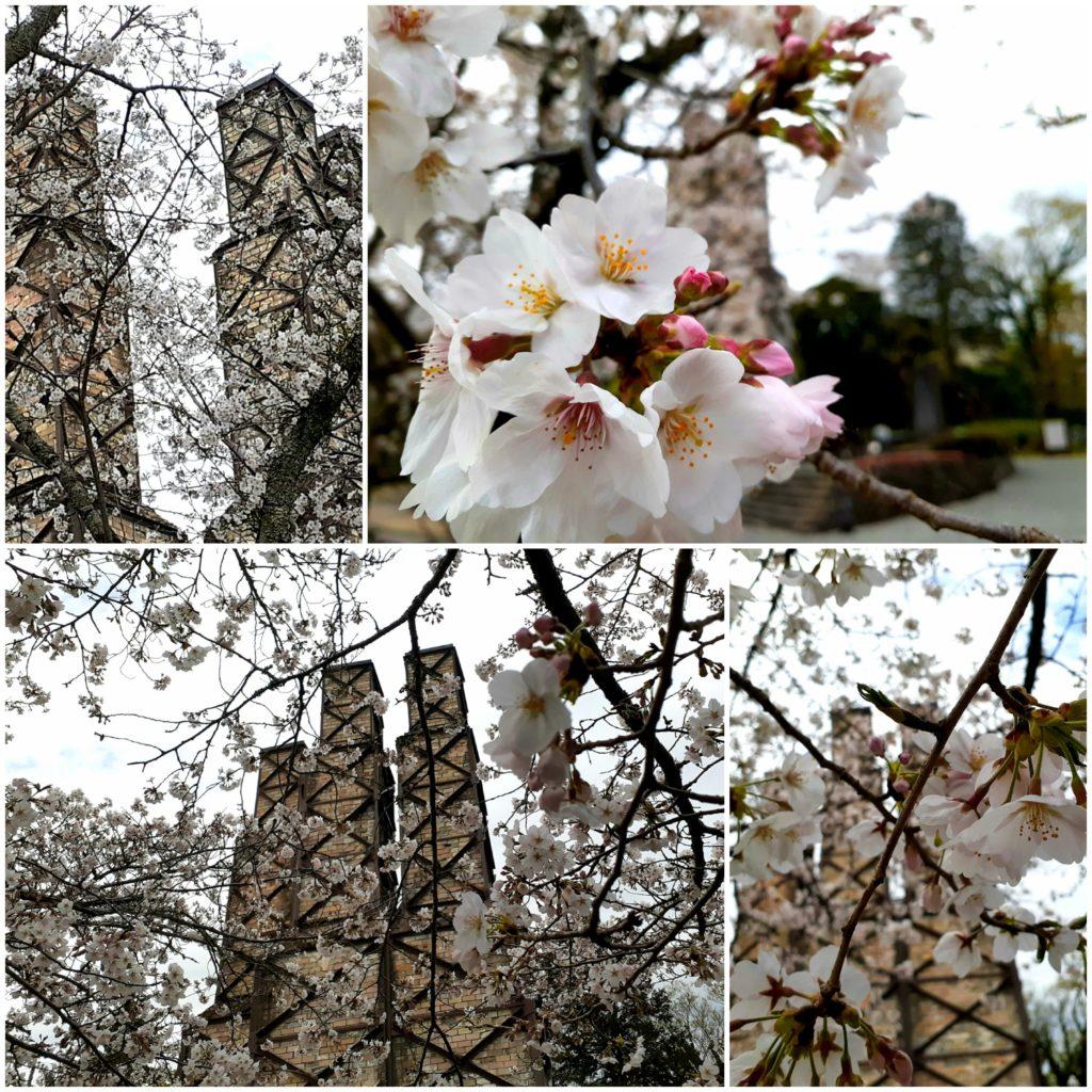韮山反射炉の桜