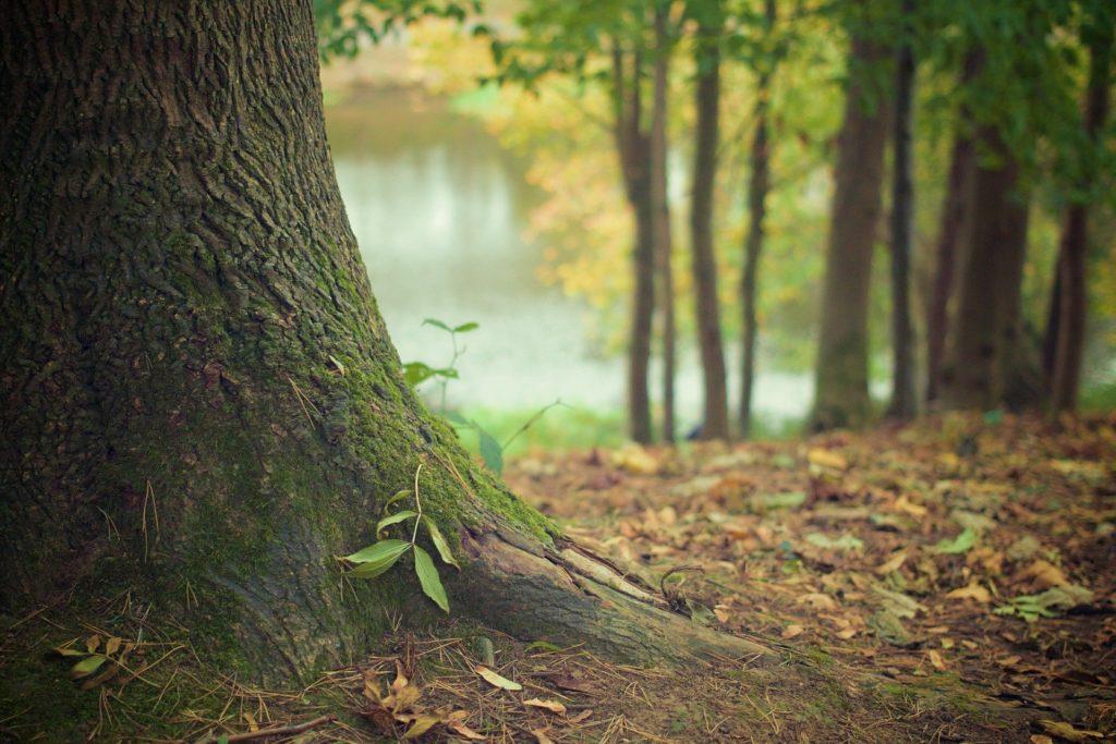 自己肯定感の教科書の自己肯定感の木