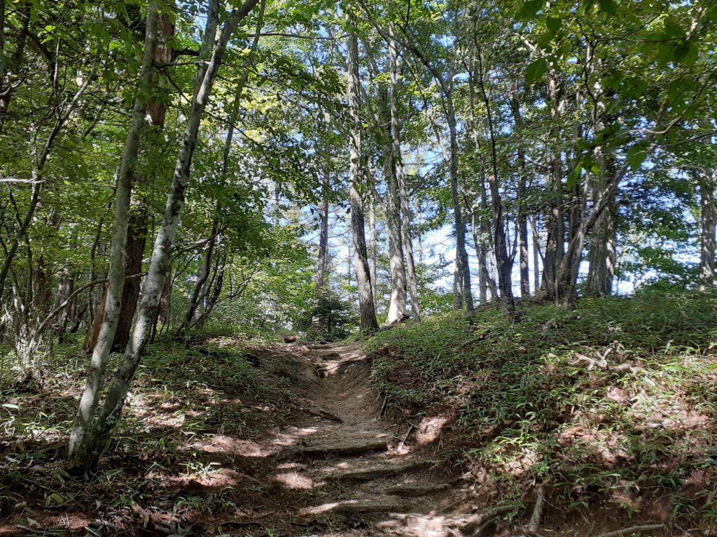 日向山山頂への登山道