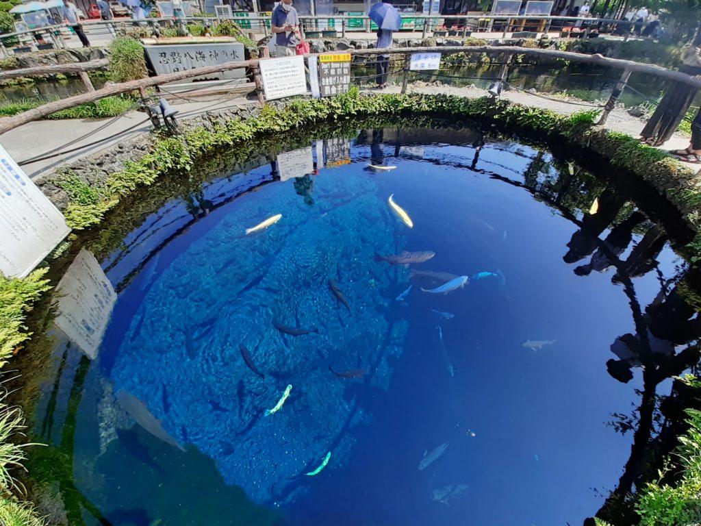 忍野八海の楽しみ方 見どころ「中心池」 湧水 神の水