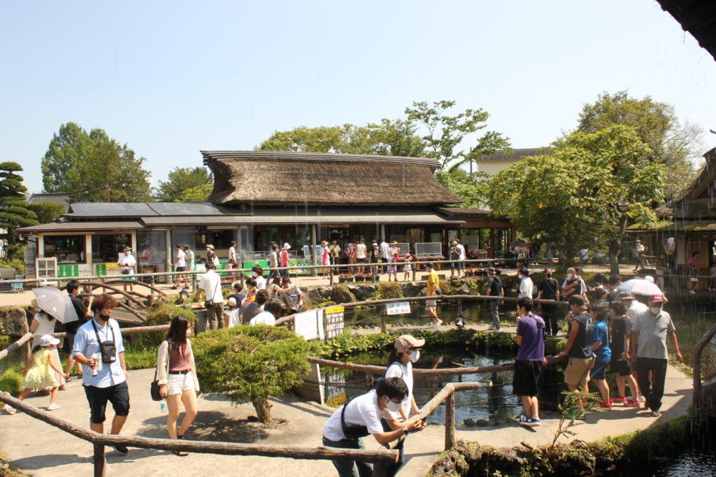 忍野八海の楽しみ方 見どころ「中心池」 観光