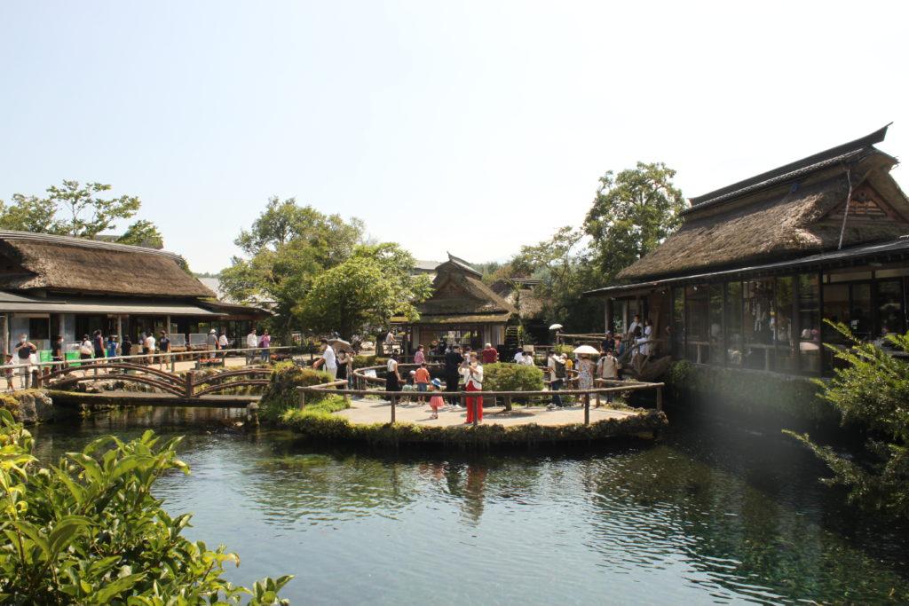 忍野八海の楽しみ方 見どころ「中心池」 湧水