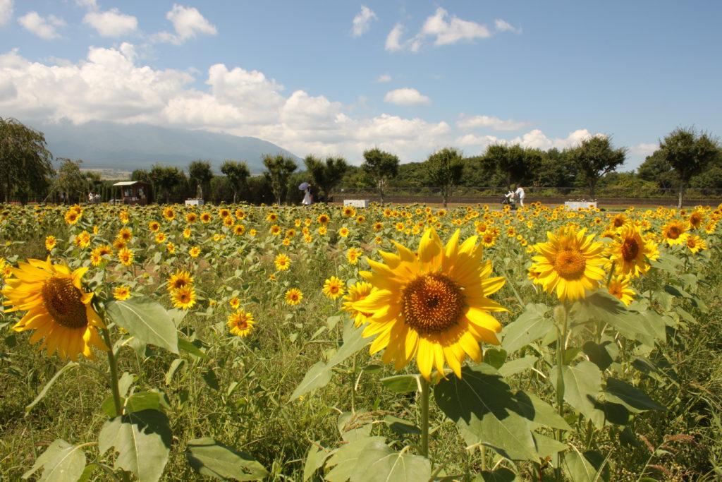 花の都公園 清流の里は夏がおすすめ