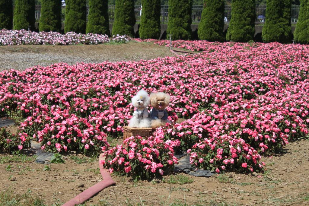 花の都公園 清流の里 ペット同伴OK