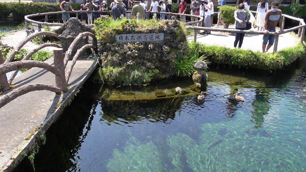 忍野八海の楽しみ方 見どころ「中心池」 日本名水百選