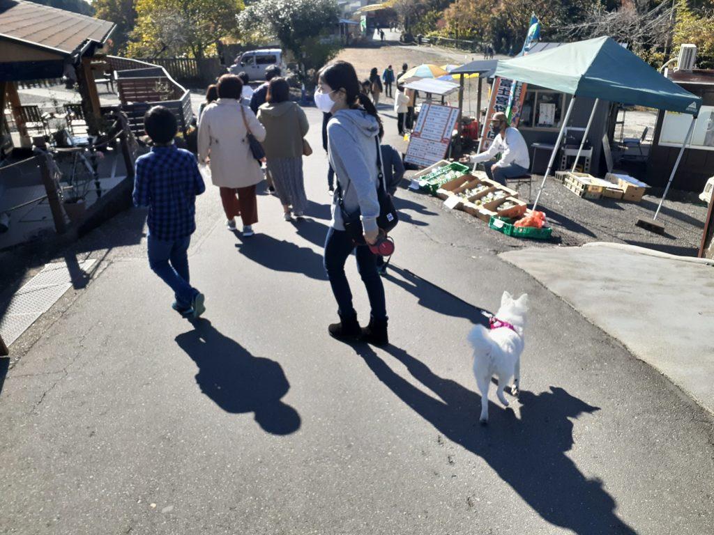 【ペット同伴観光】富士山白糸の滝は犬連れ旅行!