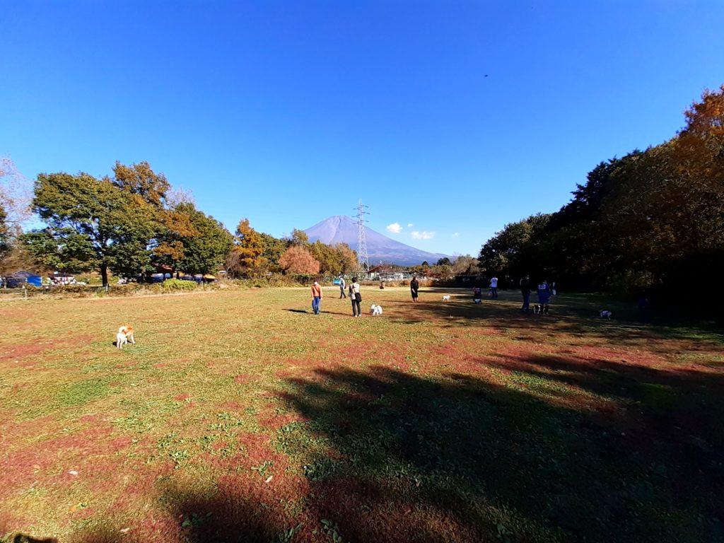 富士ミルクランド ドッグランは広い