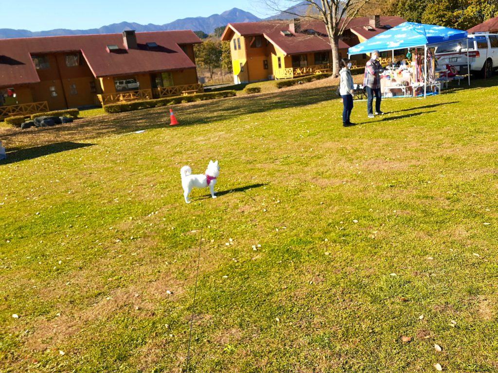 富士ミルクランド ペット連れで園内の紹介 芝生広場