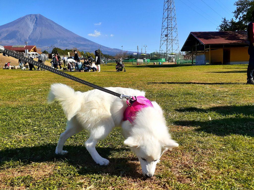 富士ミルクランド ペット連れで園内の紹介