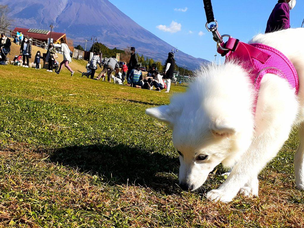 富士ミルクランド ペット連れで園内の紹介 富士山の麓