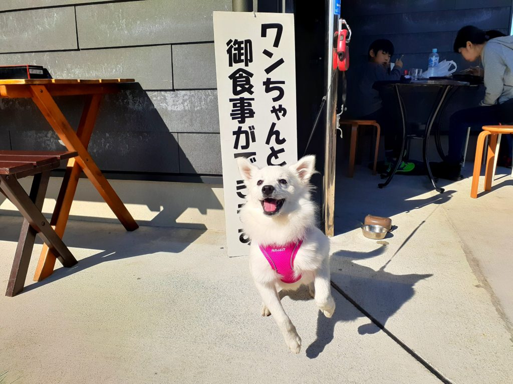 【ペット同伴観光】富士山白糸の滝で紅葉 ランチでペットOK