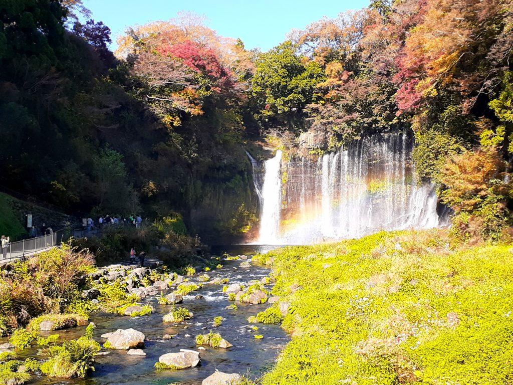 【ペット同伴観光】富士山白糸の滝で紅葉と虹を見る旅行。見ごろです。