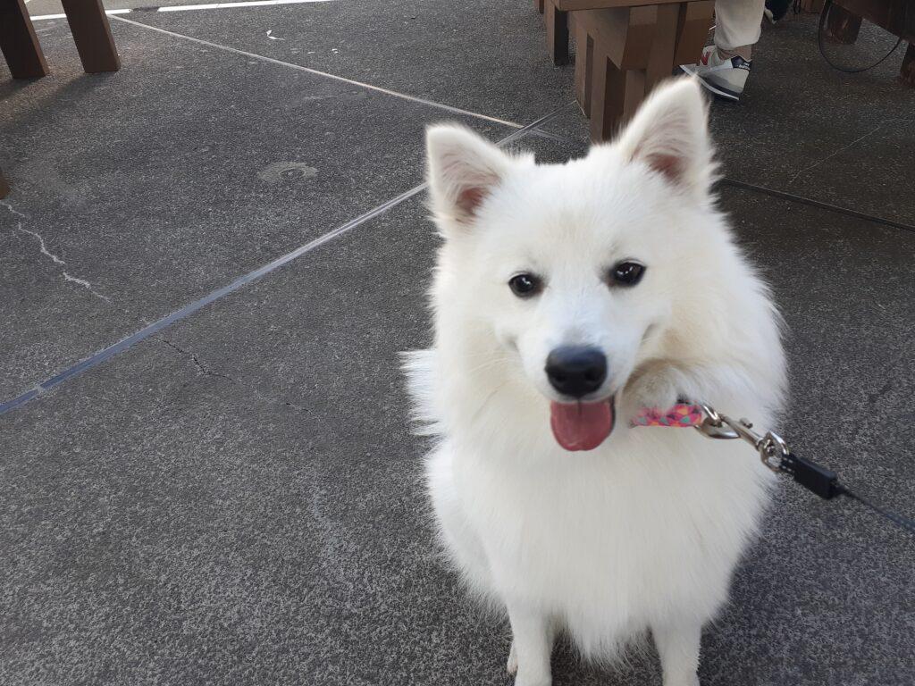 お宮横丁で犬と一緒にランチ