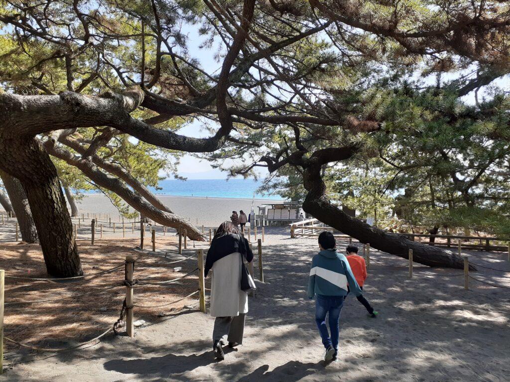 ペット連れ旅行!三保の松原で愛犬と楽しむ!