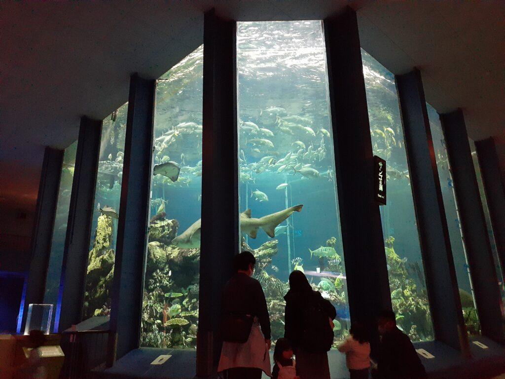 東海大学海洋科学博物館 巨大水槽