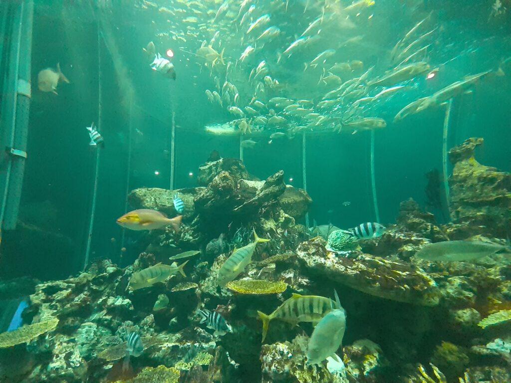 【東海大学海洋科学博物館の口コミ】子連れで楽しむ静岡の水族館!