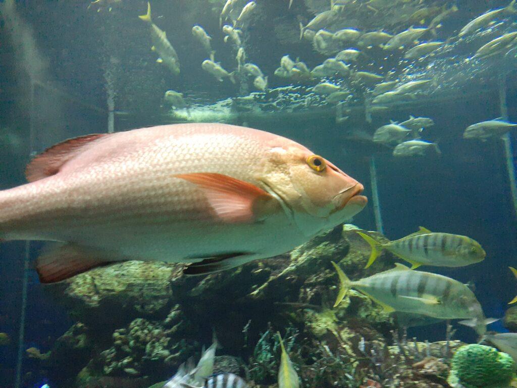 東海大学海洋科学博物館 駿河湾に住む魚