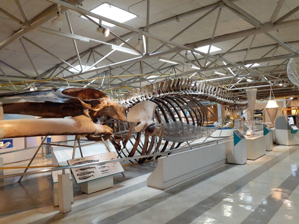 東海大学海洋科学博物館 クジラ
