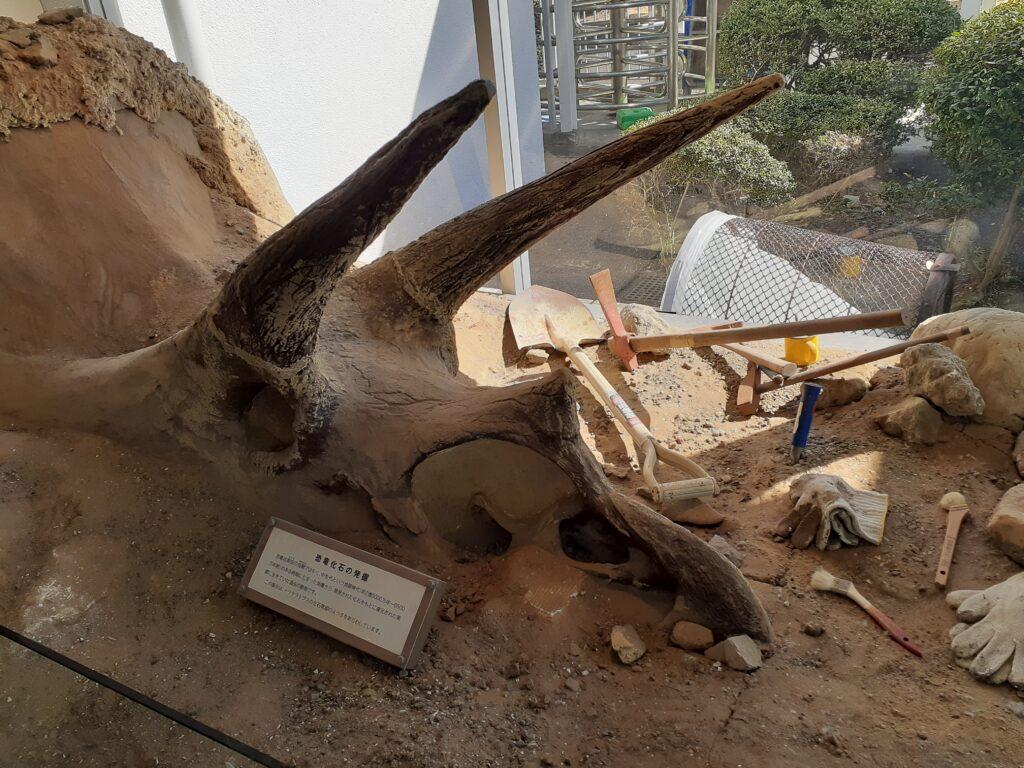 東海大学自然史博物館の入り口のトリケラトプス