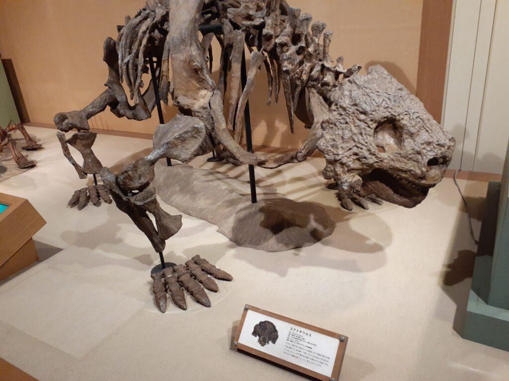 東海大学自然史博物館 スクトサウルス