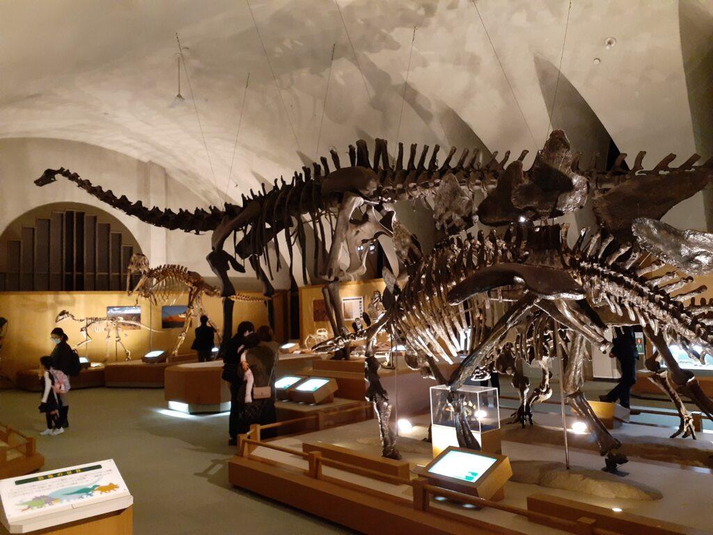 東海大学自然史博物館の恐竜!