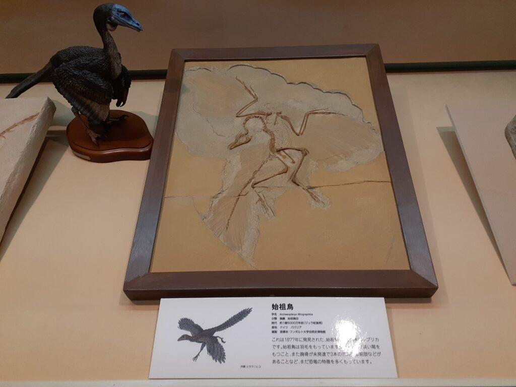東海大学自然史博物館の恐竜!始祖鳥