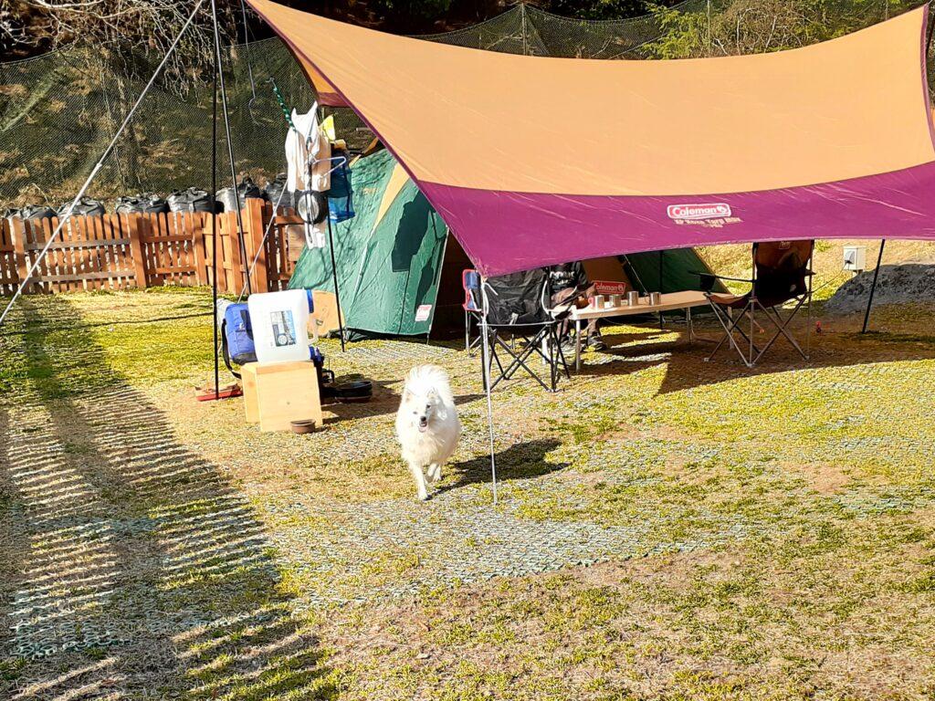 ウエストリバーオートキャンプ場のドッグランAサイトにキャンプ!