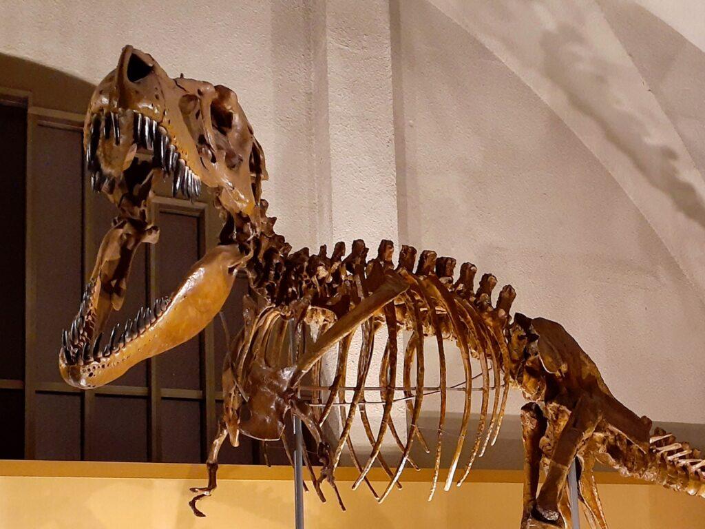 東海大学自然史博物館の恐竜!タルボサウルス