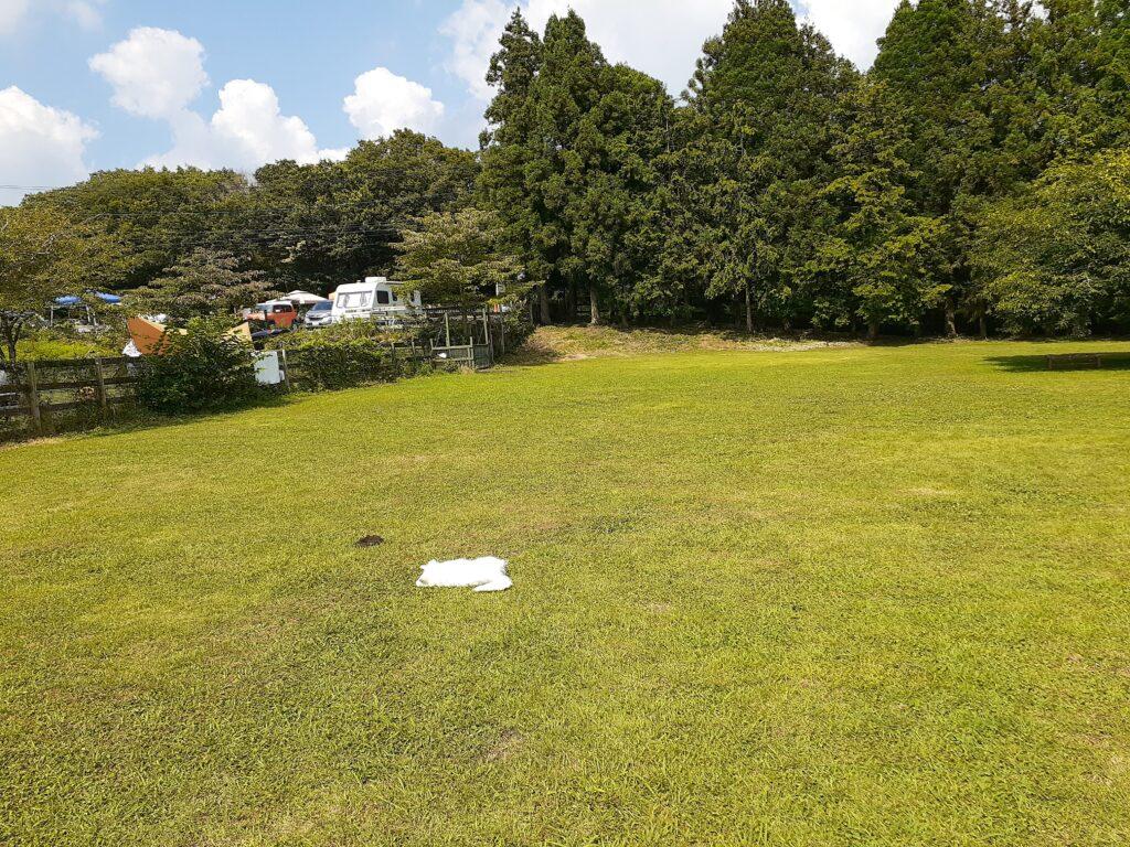 【Field Dogs Garden】朝霧の富士山麓のキャンプ場のドッグラン