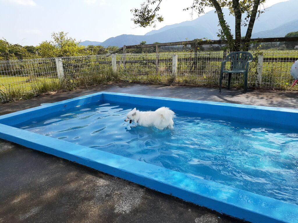 【Field Dogs Garden】朝霧の富士山麓のキャンプ場でプール